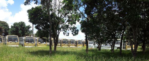 Estacionados lado a lado,  sob as árvores, os ônibus ocupam uma vasta área do lote de 20 mil m². Foto: Chico Sant'Anna