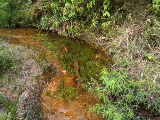Nascentes no Parque Gatumé podem ficar contaminadas e até desaparecerem com a implantação do Lixão em Samamaia.