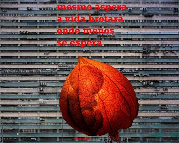 Poema concreto de TT Catalão2