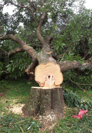 Ambientalistas e moradores da cidade questionam aação devastadora do GDF