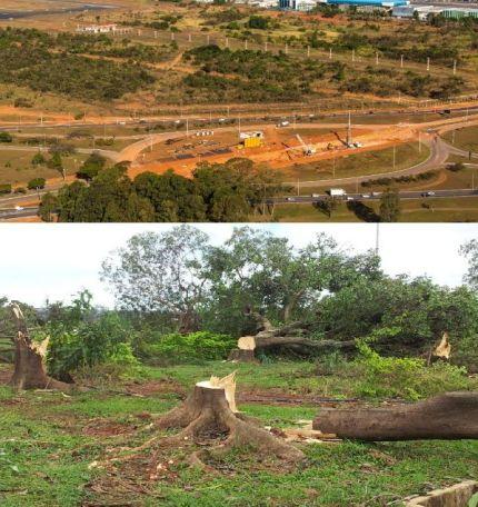 Acima: imagem aérea mostra o Balão do aeroporto JK, em Brasília, desmatado: multa de R$ 140 mil. Abaixo: flagrante das árvores no dia do abate.