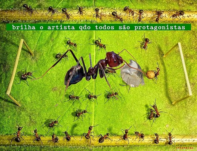 Foto-protesto Copa formiga