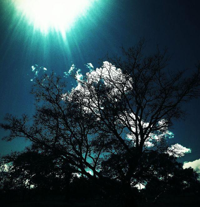 Céu sobre silueta de árvore