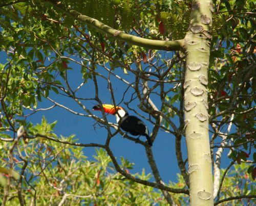 cada vez mais, aves silvestres tem se aproximado das áreas urbanas da Capital Federal. Foto de Chico Sant'Anna.