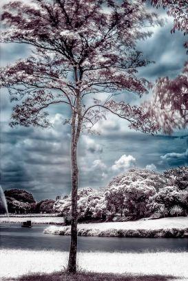 Foto árvore