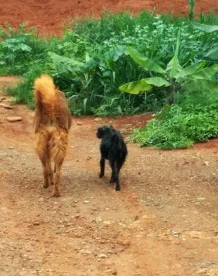 A população de animais domésticos que vive de forma vadia nas ruas não foi computada. Foto de Chico Sant'Anna.