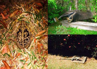 animais silvestres no PW