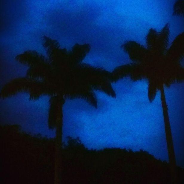 Palmeira Imperial noturno