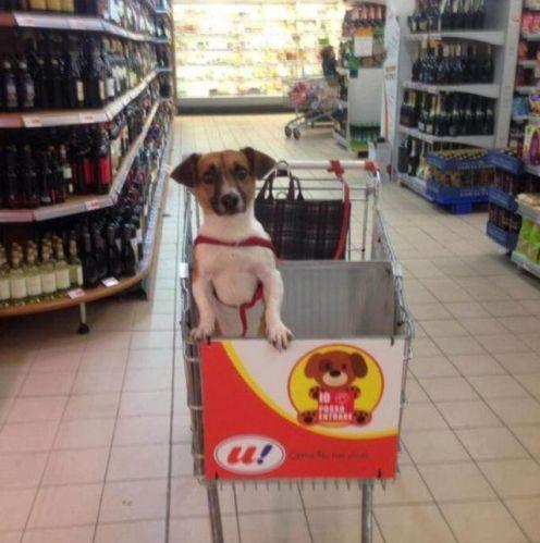 Carrinho de mercado com cachorro 1