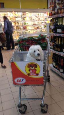 Carrinho de mercado com cachorro2