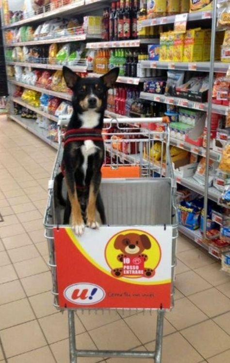 Carrinho de mercado com cachorro3