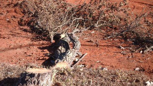 Vegetação nativa do cerrado já começou a ser cortada. Foto de Roberto Max Lucich