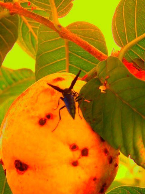 abelha na fruta
