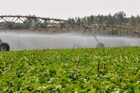 O consumo d'água do meio rural pode chegar a 80% de toda a água consumida no Distrito Federal. Agricultura irrigada Planaltina; Foto de Tony Winston/Agência Brasília