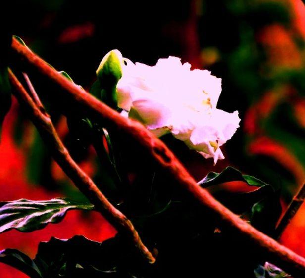 flor-branca-jardim-1