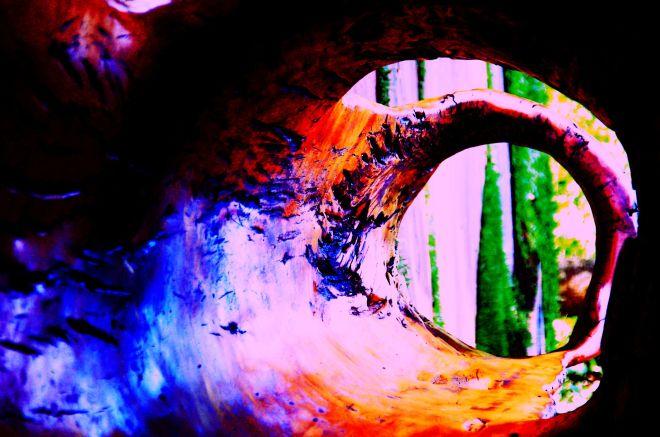 inhotim-dez-2012-3-com-efeito